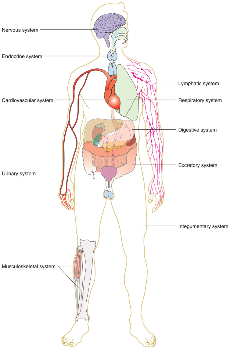 Nutrients The Human Body Diagram Not Lossing Wiring Diagram