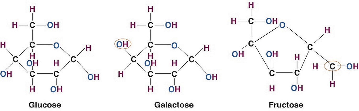 A Closer Look at Carbo...D Galactose Structure
