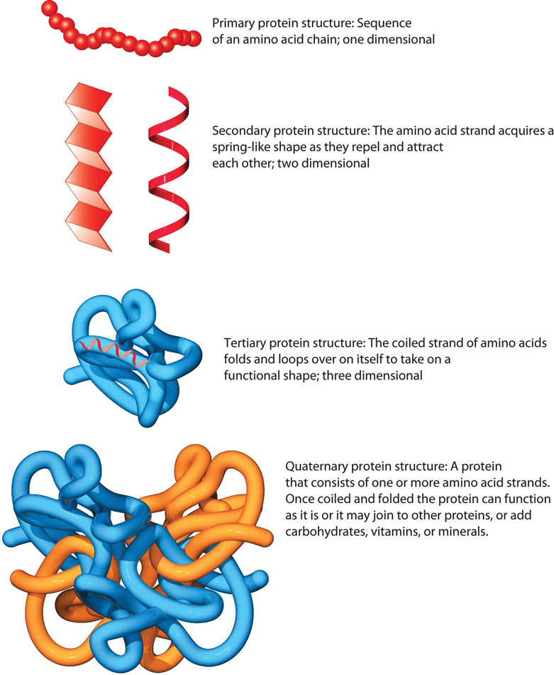 Quaternary Structure Of Dna Defining Protein