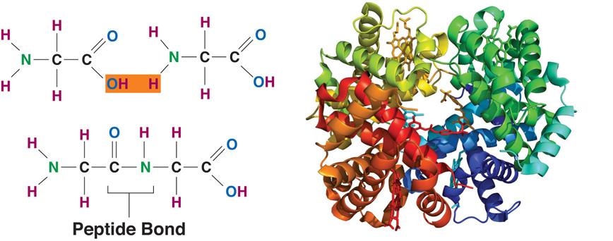 Defining Protein