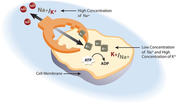 Electrolytes Important For Fluid Balance
