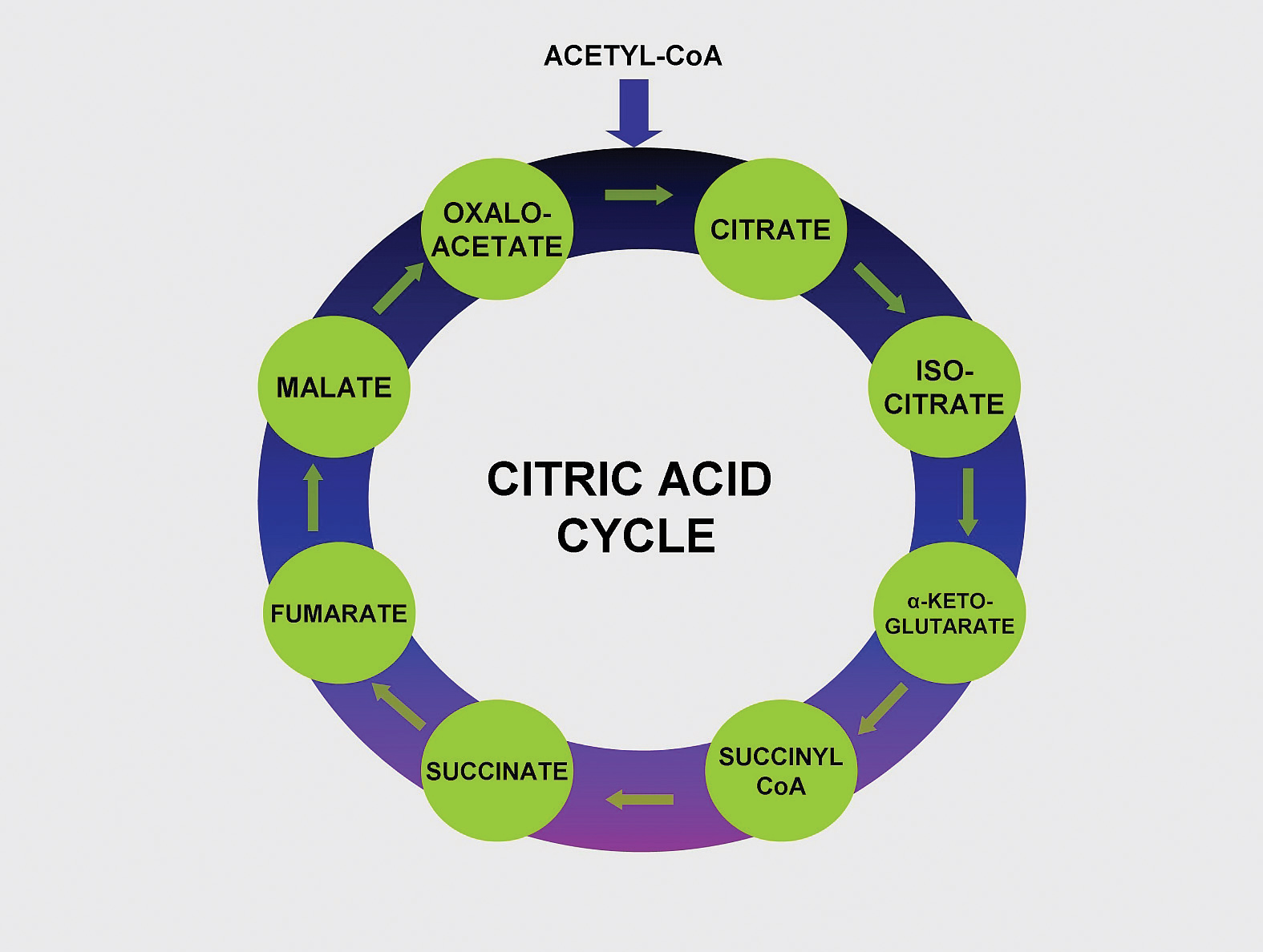 atp anabolic pathways