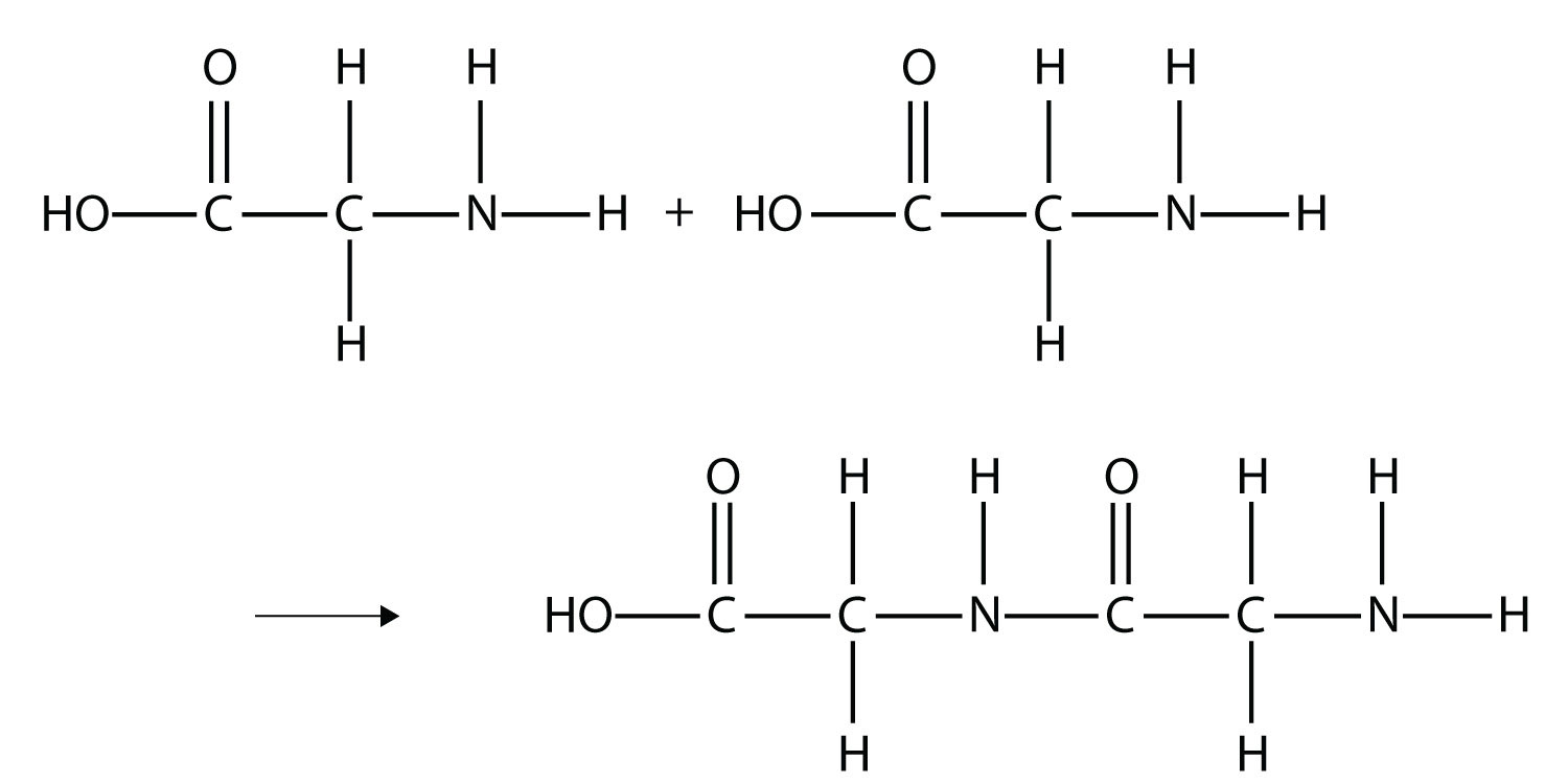 glucose bond diagram  polymers