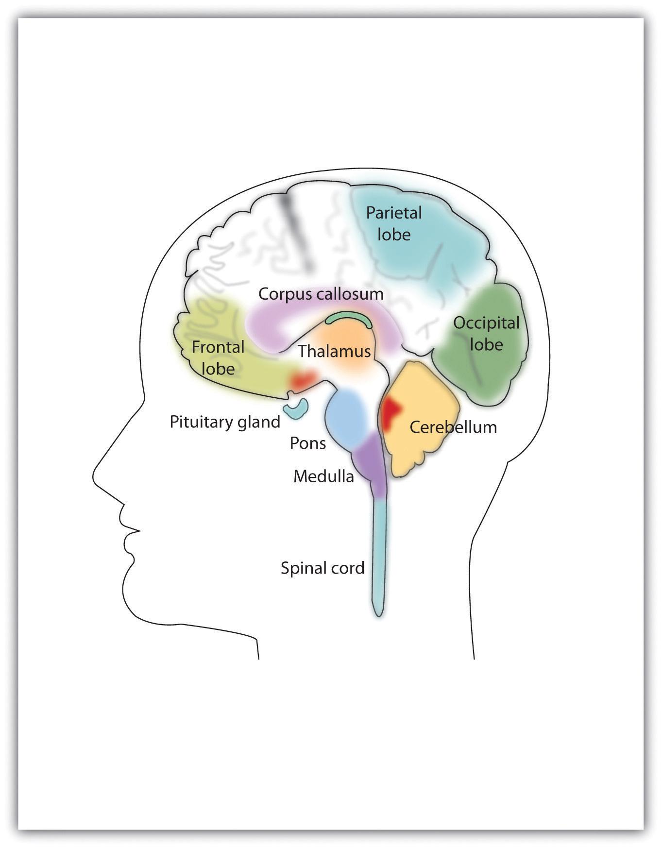 cerebellum memory how to play basketball