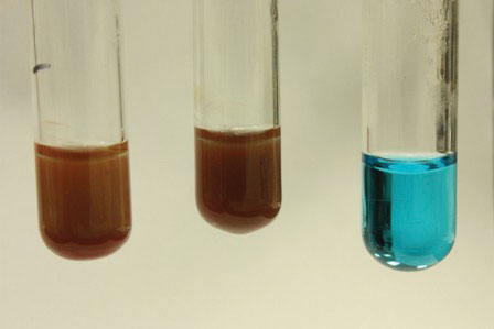 Image Result For How To Test For Sucrose In A Solution