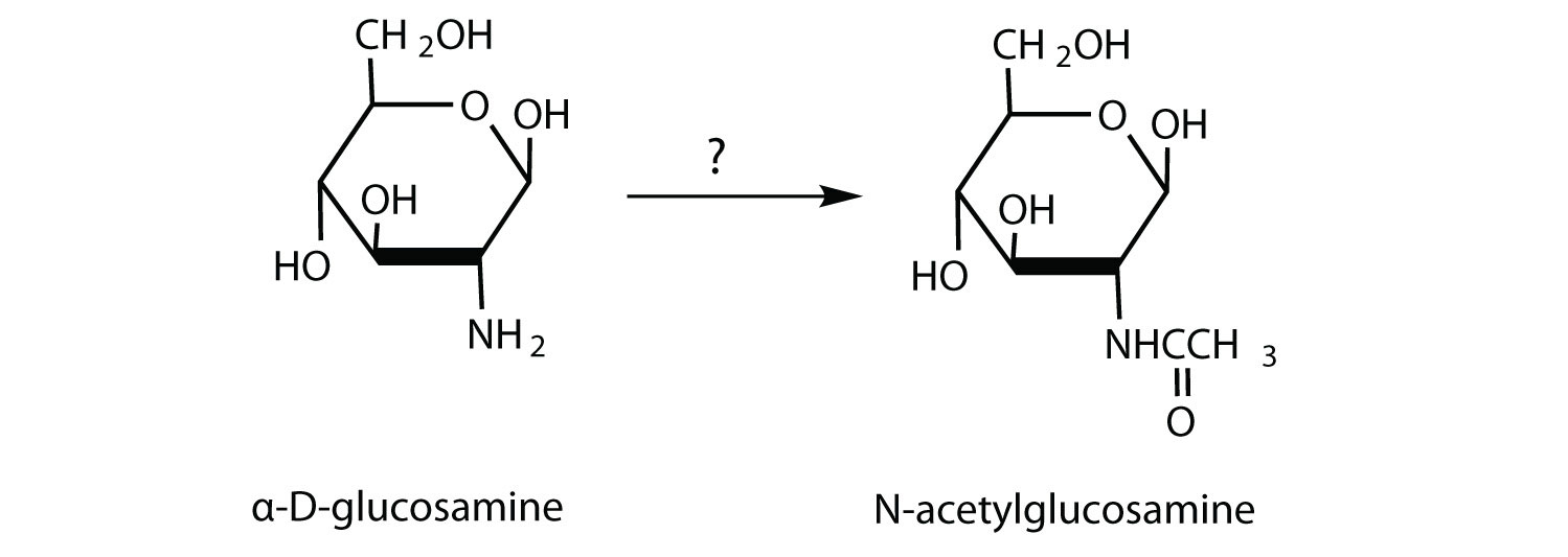 Alpha D Galactose Fischer Projection of D-glucosamine to