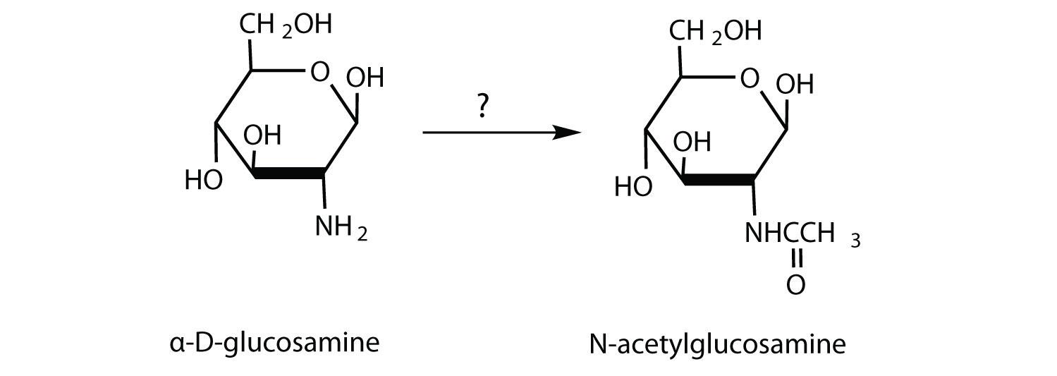 D Galactose Fischer of D-glucosamine to