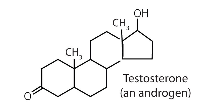 an introduction to the testosterone a male hormone in steroids Testosterone is a hormone produced by all human beings and is the primary male sex hormone through our discussion, well take a look at testosterone cypionate, and examine the pros and cons.