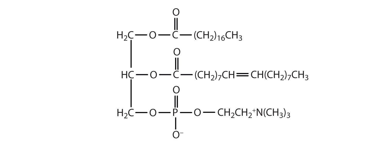 Lipids and phospholipids essay