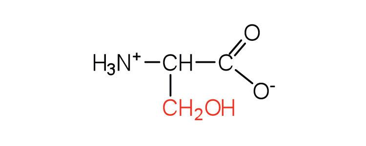 Amino Acids Are Building Blocks Of Dna
