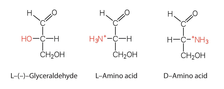 Amino acid molecule diagram amino acids proteins and enzymes
