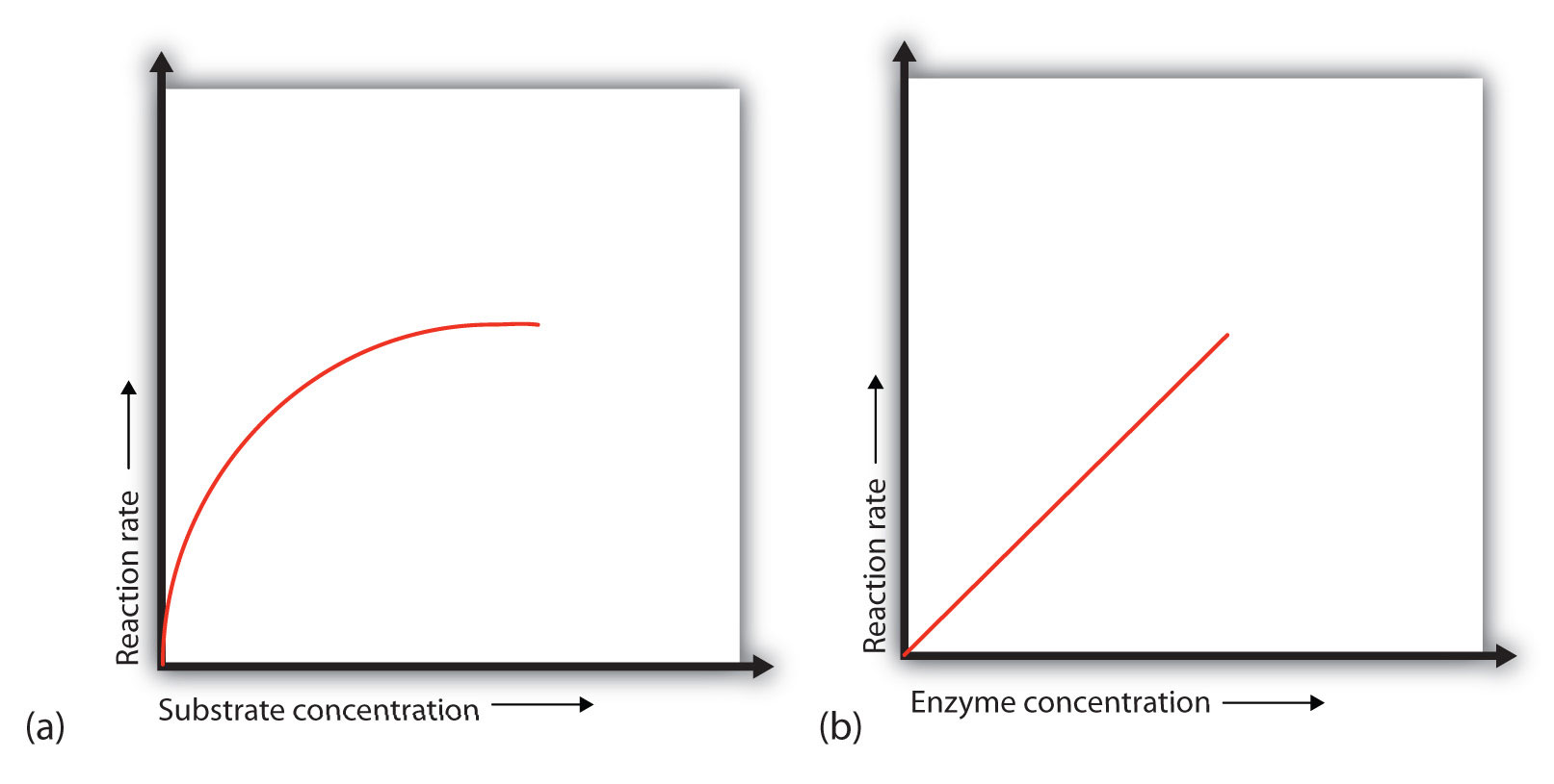 Help me do my essay investigation into the effect of changing the substrate concentration on the enzyme catalyse