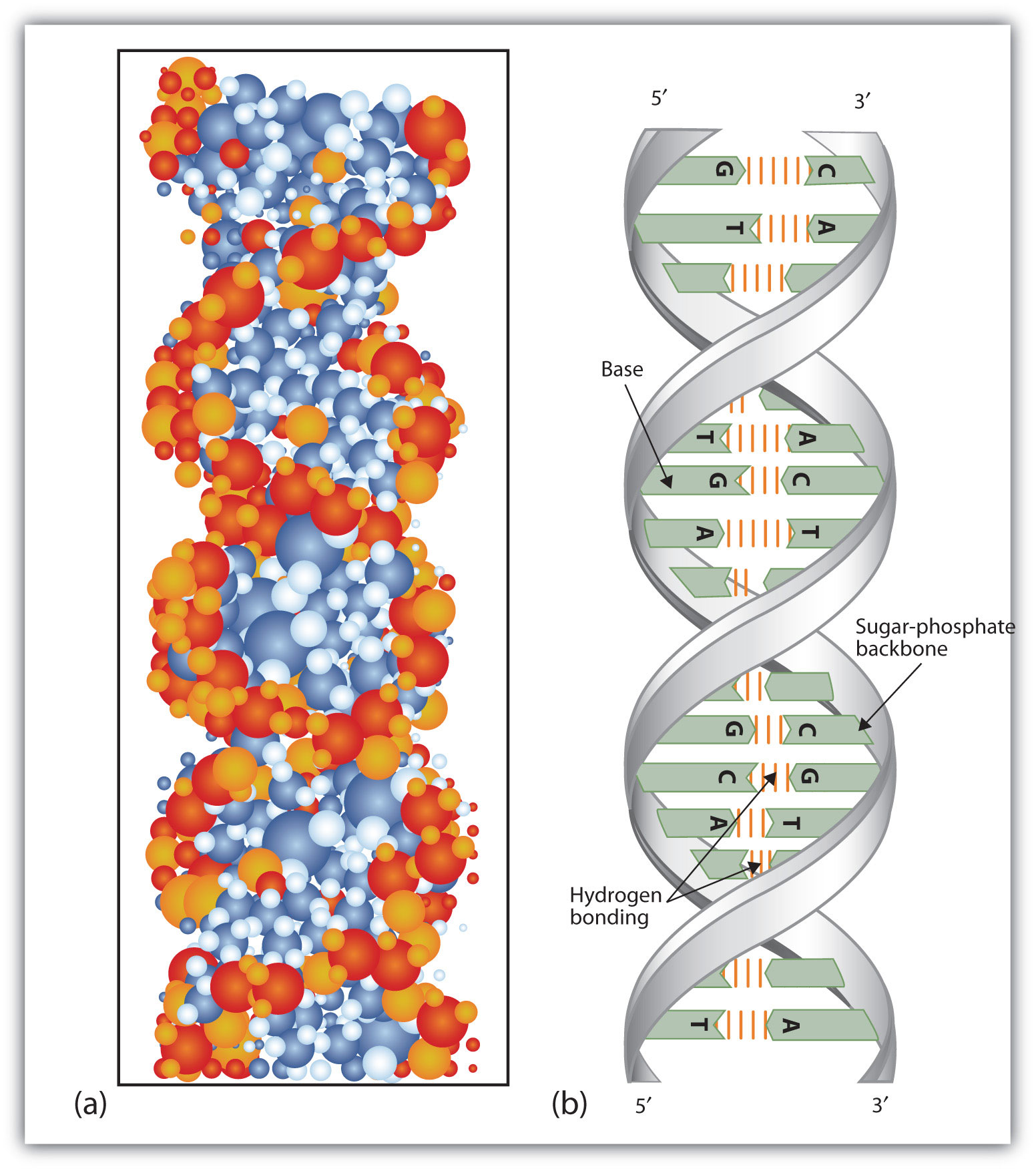 dna double helix Bekijk stockillustraties van dna microarray and double helix ga voor hoogwaardige foto's met een hoge resolutie naar getty images.