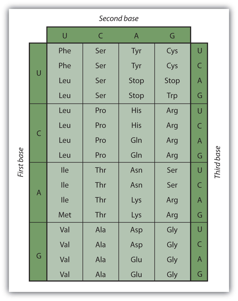 how to read standard genetic code table