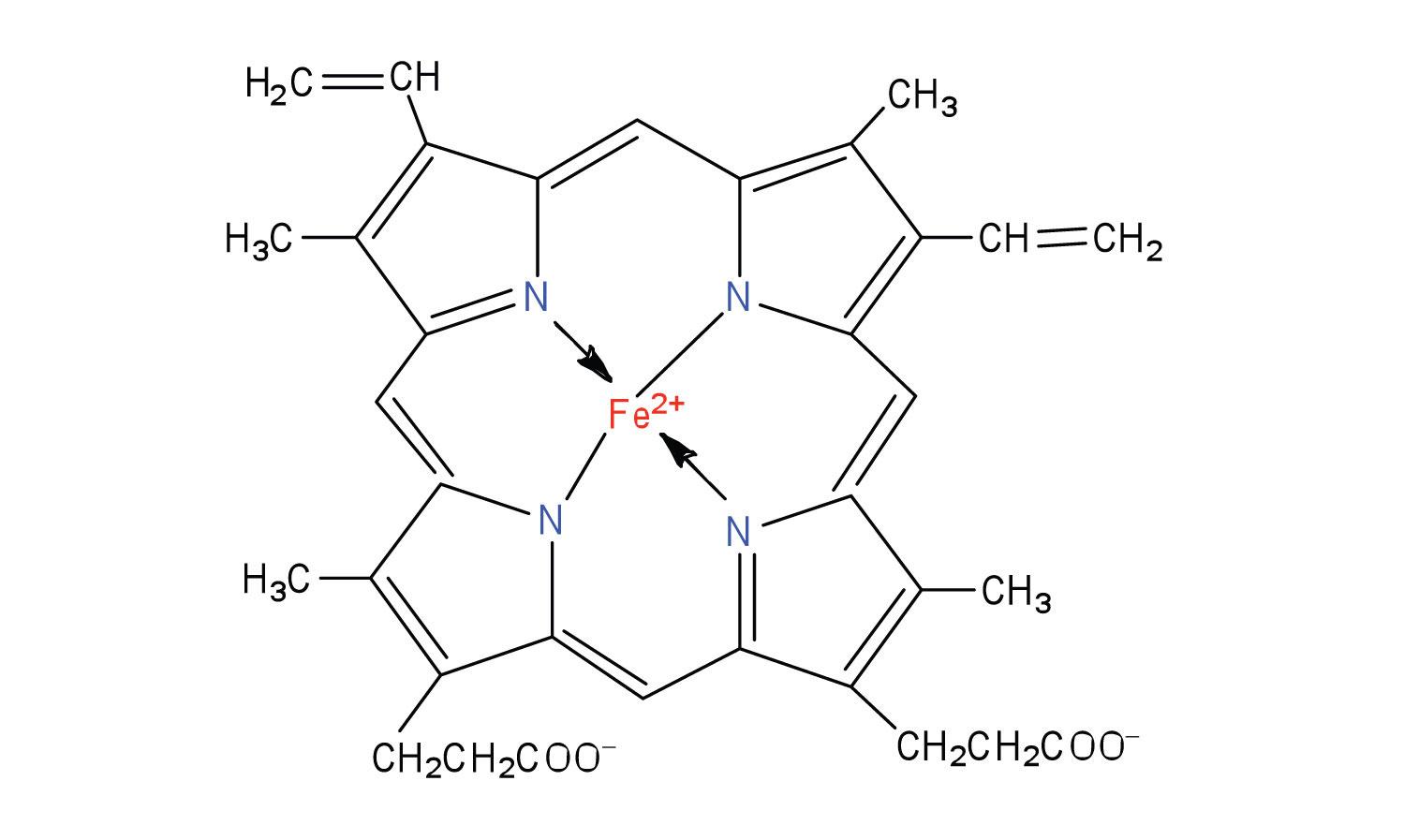 Energy Metabolism