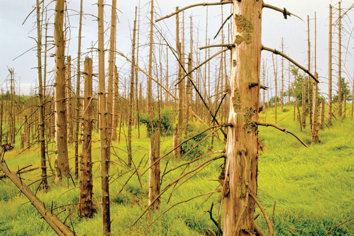 An overview of using energy and acid rain damages in the united states