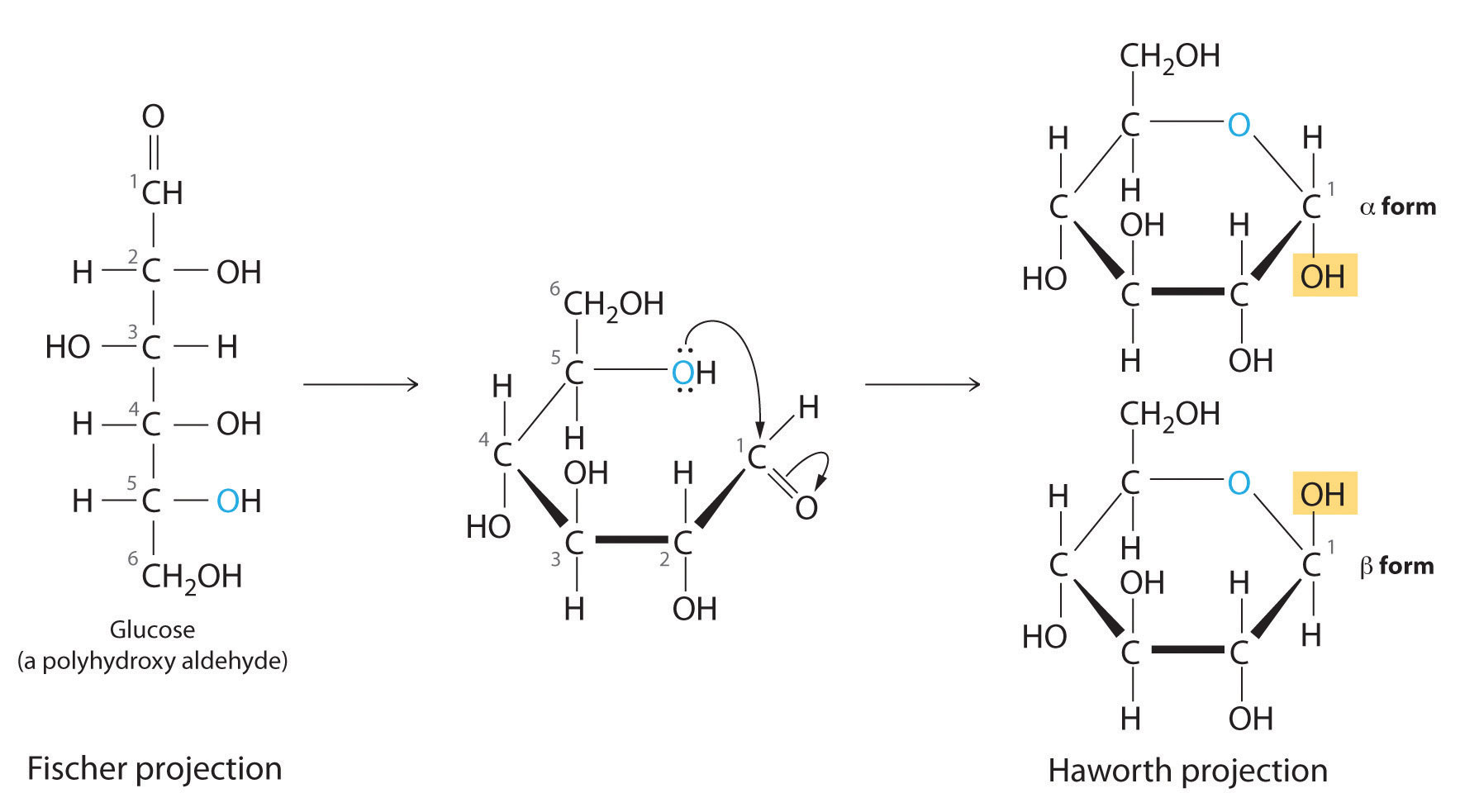fructose fischer projection A fischer projection is used to differentiate between l- and d- molecules on a fischer projection, the penultimate (next-to-last) carbon of d sugars are depicted with hydrogen on the left and hydroxyl on the right.