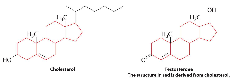 organic testosterone