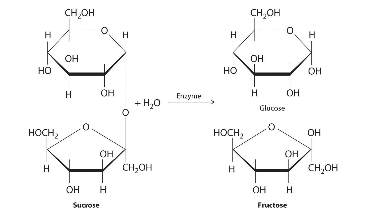 Monosaccharide Exsist In Ring Structure
