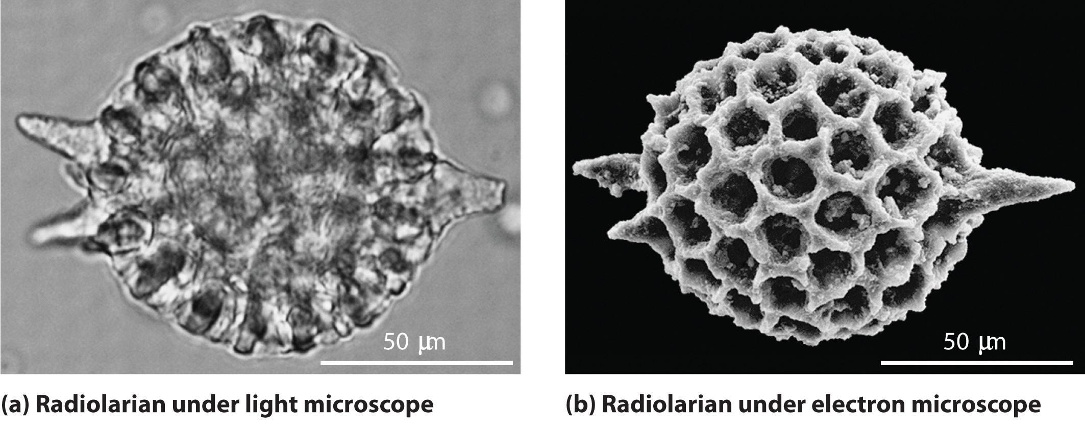 Resolving power of microscopes