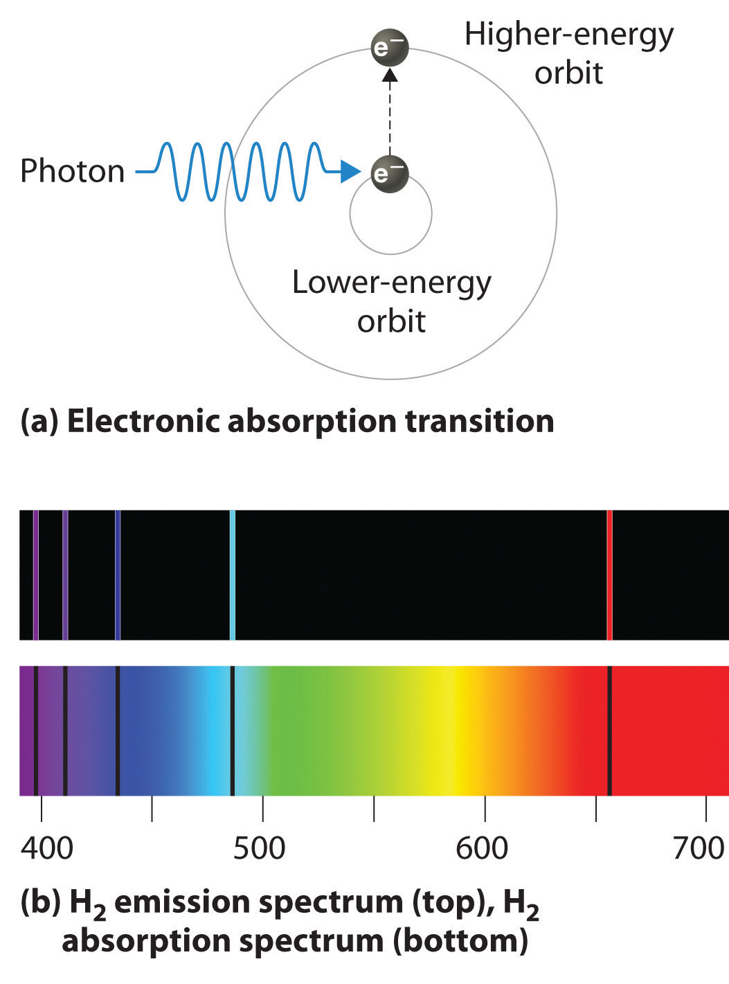 B Bbdd B F F Da B on Bohr Model Neon Atom
