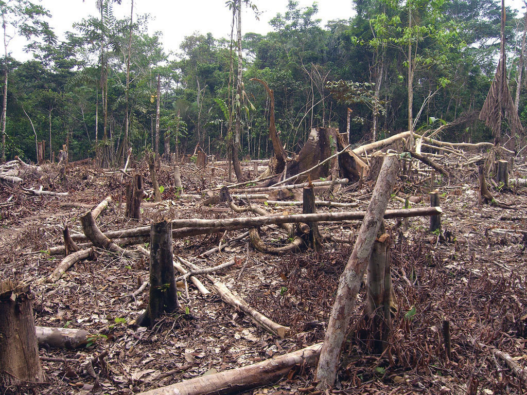rainforest depletion caused by logging thesis statement Amazon deforestation what are the deeper causes for the demand for rainforest products your thesis statement was a little confusing at first.