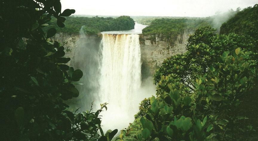 Sugarcane Natural Resources Of Guyana